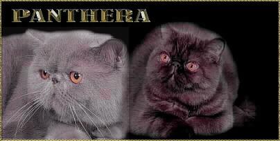 Panthera.cz